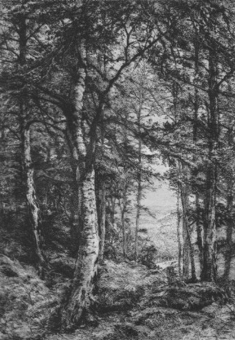 Etching of Eastbury Wood by Charles Phillip Solcombe 1881 Northwood Watford Portfolio MBM Portfolio: An Artistic Periodical.